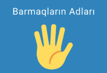 Photo of Barmaqların Adları. Əl Barmaqları Haqqinda Melumat ✅
