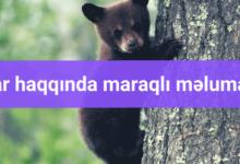 Photo of Ayılar haqqinda maraqlı məlumatlar.